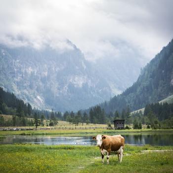 Ebene Wanderung im Seebachtal, vorbei am Stappitzer See