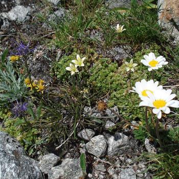 Blumenwanderung